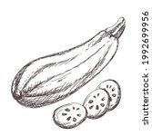 sketch of zucchini contour... | Shutterstock .eps vector #1992699956