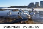 Newcastle  Australia   Jun 2021 ...