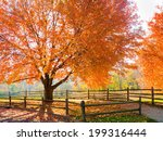 Spectacular Autumn Colors In...