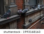 Row Of Pigeons On The Side Of...