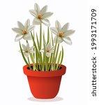white hibiscus room plant...   Shutterstock .eps vector #1993171709