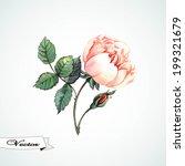 watercolor rose vector.  vector ...   Shutterstock .eps vector #199321679
