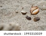 White Sand And Small Shells On...