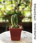 beautiful cactus plant pot in... | Shutterstock . vector #1993349666