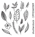 different beautiful plants with ... | Shutterstock .eps vector #1993360589