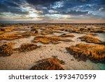 Sunrise On The Mojave Desert