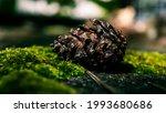 16 9 Close Up Image Of A Pine...