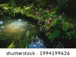 Detail Of Flowers Along A Pond...