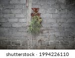 Elkhorn fern plant attached to cement wall. The elkhorn fern or Staghorn fern with the scientific name Platycerium bifurcatum is an evergreen epiphytic fern that produces a distinctive fertile midrib