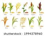 grass cereal crops ...   Shutterstock .eps vector #1994378960