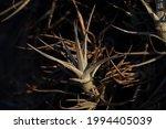 Grey Spiky Leaf Cluster Of An...