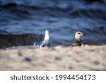 A Closeup Shot Of Seagulls...