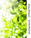 fresh green leaves | Shutterstock . vector #199467953