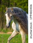 white andalusian horse portrait ... | Shutterstock . vector #199483406
