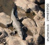 Kruger National Park  South...