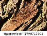 Pattern On Rough Textured Bark...