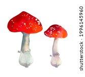 Watercolor Amanita Mushrooms....