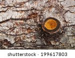 Tree Bark Texture With Knot