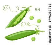 pea pod vegetable. green peas... | Shutterstock .eps vector #1996383716