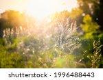 sunshine  blurred background ... | Shutterstock . vector #1996488443