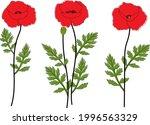 poppies flowers vector...   Shutterstock .eps vector #1996563329