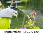 Woman Spraying Flowers In The...