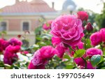 Stock photo roses in a garden near thr palace 199705649