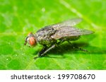 fly on a green leaves | Shutterstock . vector #199708670
