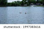 Scenic Lake Flying Birds Park