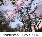 Trees Under A Pink Sky