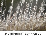 bokeh from out of focus   Shutterstock . vector #199772630