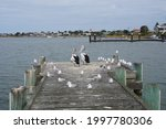 Pelicans And Seagulls On A...