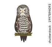 owl specie as nocturnal bird of ...   Shutterstock .eps vector #1997894093