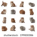 Stock photo british long hair kittens weeks old 199830386