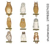 different specie of owl as...   Shutterstock .eps vector #1998307433