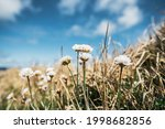 Gentle White Flowers Growing On ...