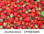Fresh Juicy Strawberries  ...