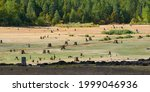 Dried Lake With Old Tree Stumps ...