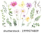 Set Of Wildflowers  Wild Plants ...