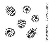 fresh raspberry berries doodle... | Shutterstock .eps vector #1999382090
