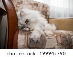 Funny Face White Persian Cat O...