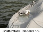 Seagull Bathing In A Pool Of...