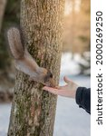 A Man Feeds A Squirrel With...