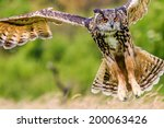 Eagle Owl Swoops In Low Huntin...