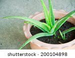 Aloe Vera Is A Herb That Can...