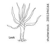 leek. vegetable culture. vector ... | Shutterstock .eps vector #2001346166