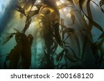 bright light pours into... | Shutterstock . vector #200168120