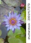 Purple Lotus Flower Looks...