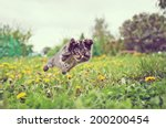 Stock photo funny little kitten is jumping on green meadow in summer 200200454