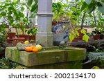 Stone  Plants  Vase  Pillar  In ...